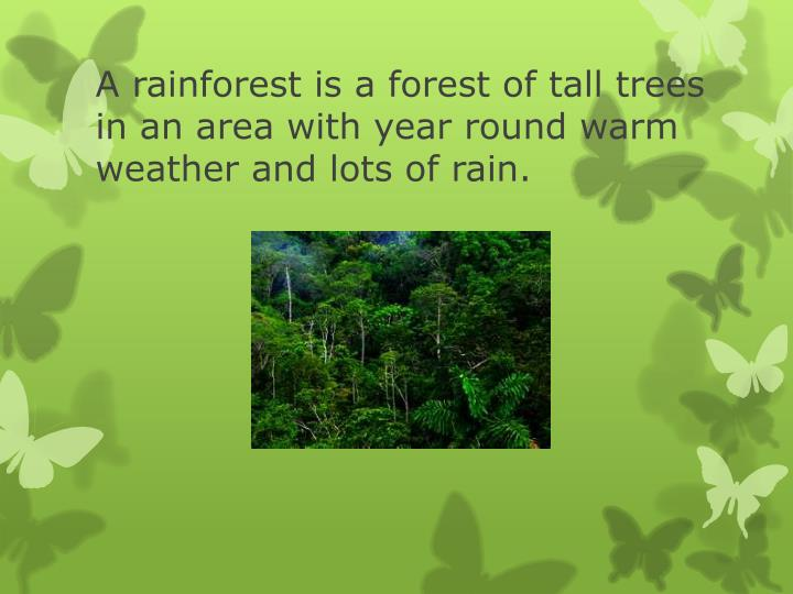 A rainforest is a forest of tall trees in an area with year round warm weather and lots of rain.