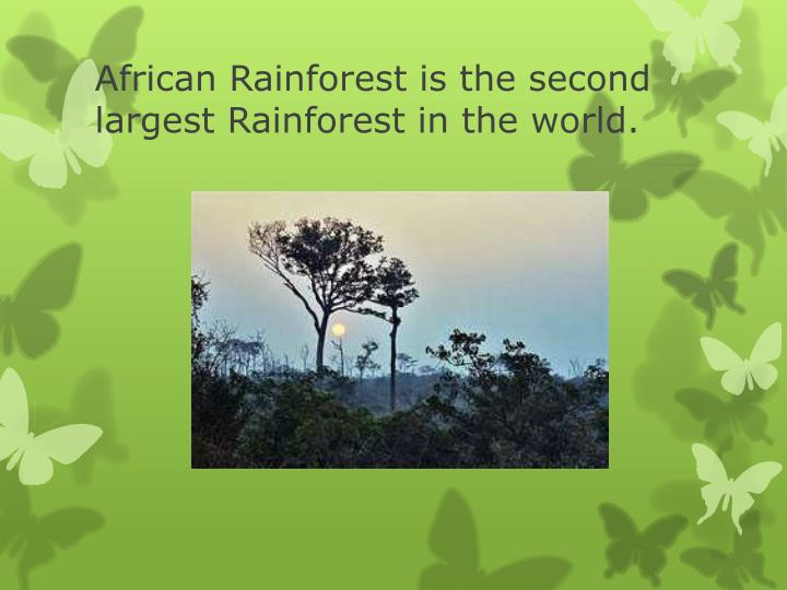 African Rainforest is the second largest Rainforest in the world.