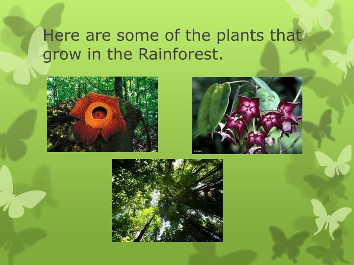 Here are some of the plants that grow in