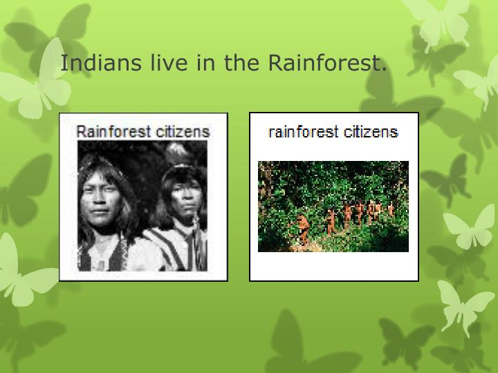 Indians live in the Rainforest.