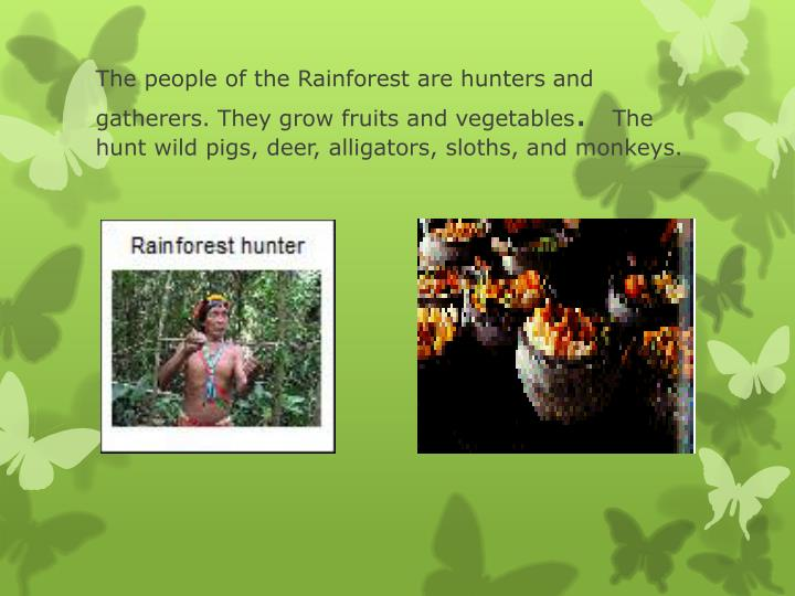 The people of the Rainforest are hunters and