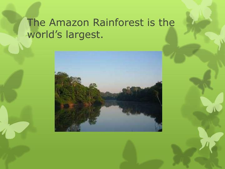 The Amazon Rainforest is the world's largest.
