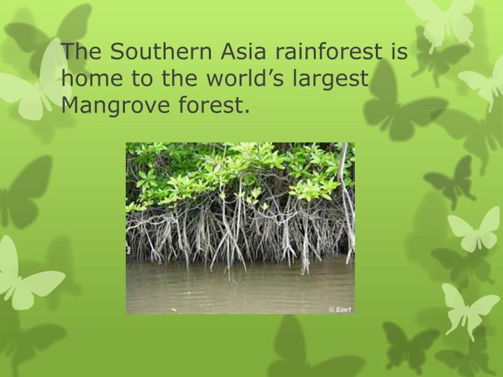 The Southern Asia rainforest is home to the world's largest Mangrove forest.