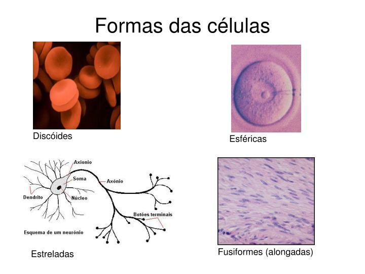 Formas das células