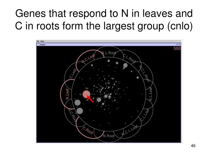 Genes that respond to N in leaves and C in roots form the largest group (cnlo)