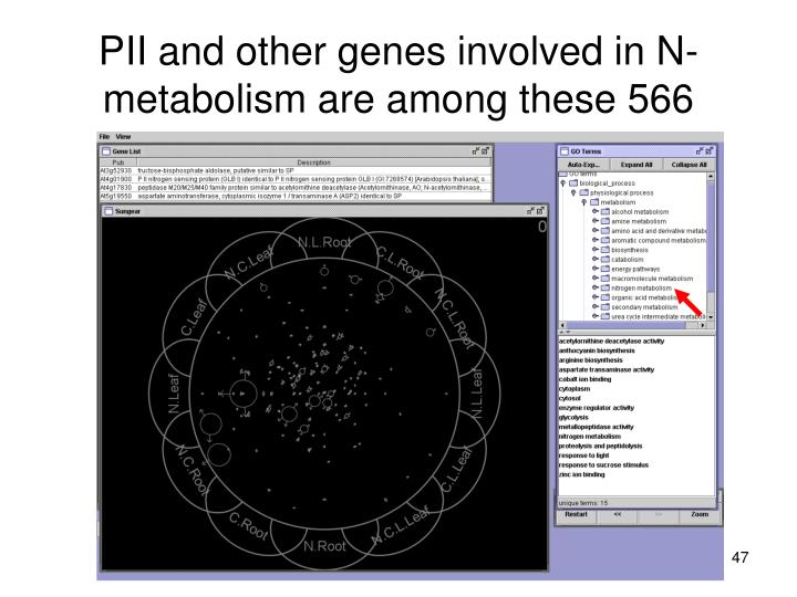 PII and other genes involved in N-metabolism are among these 566