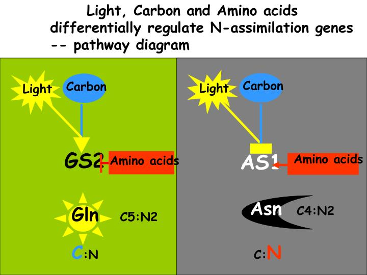 Light, Carbon and Amino acids