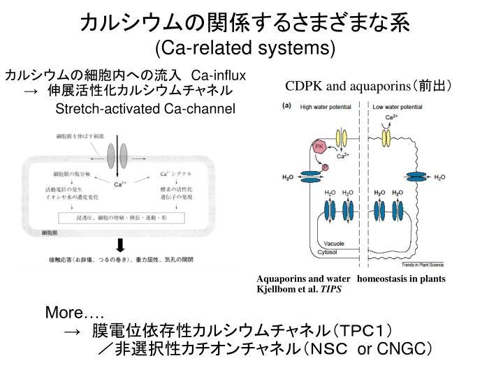 カルシウムの関係するさまざまな系