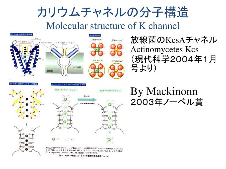 カリウムチャネルの分子構造