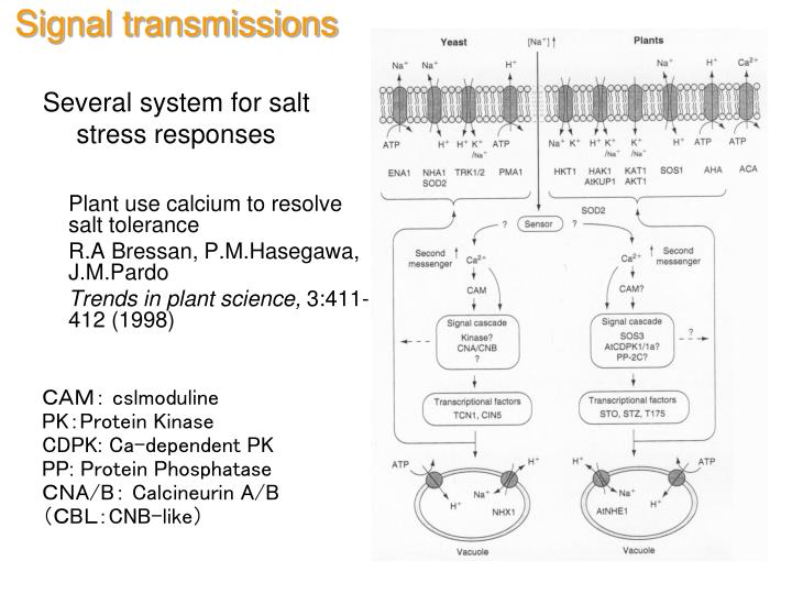 Signal transmissions