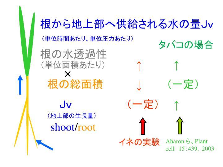 根から地上部へ供給される水の量Jv