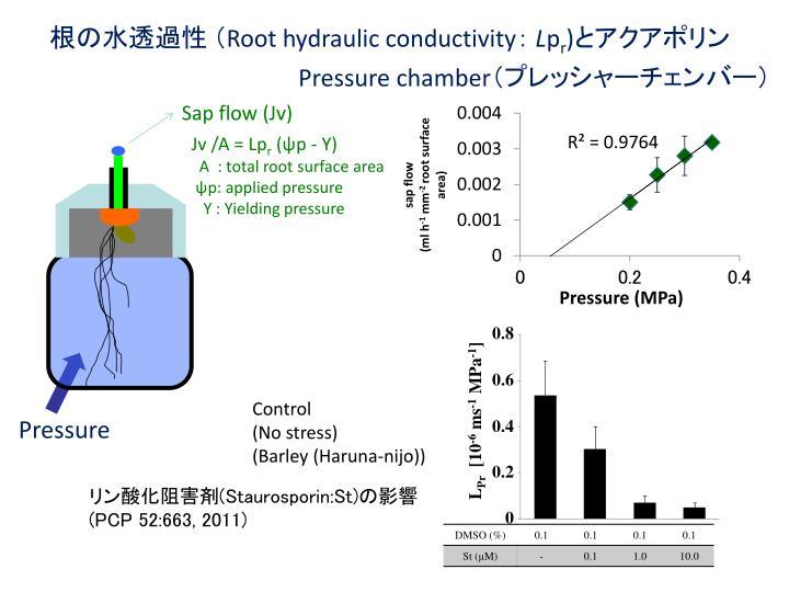 根の水透過性