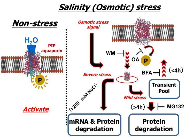 Salinity (Osmotic) stress