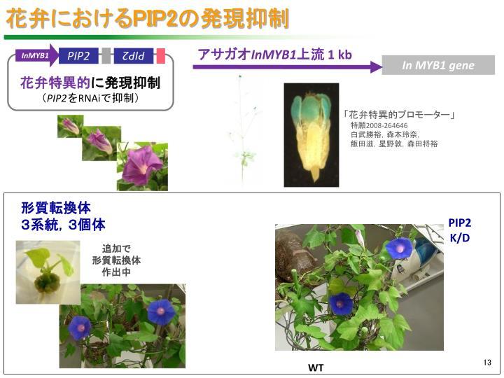 花弁における