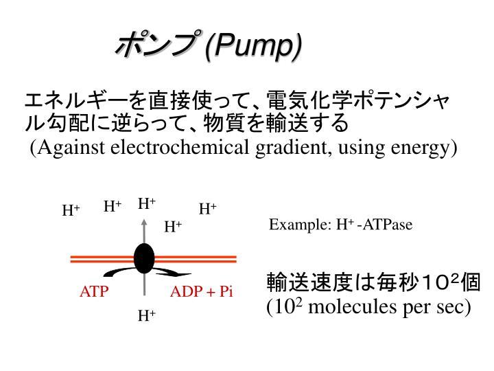ADP + Pi