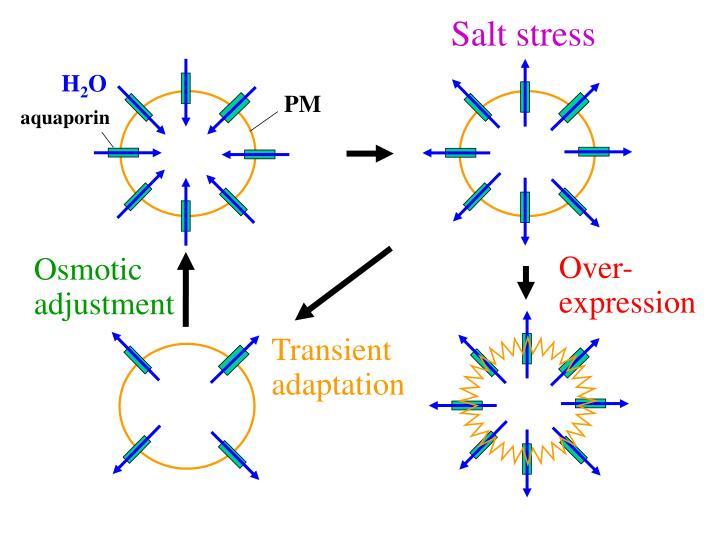 Salt stress