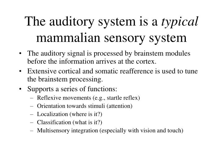 The auditory system is a