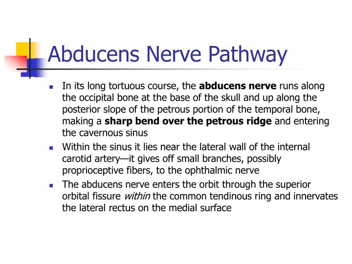 Abducens Nerve Pathway