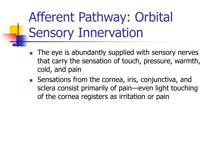 Afferent Pathway: Orbital Sensory Innervation