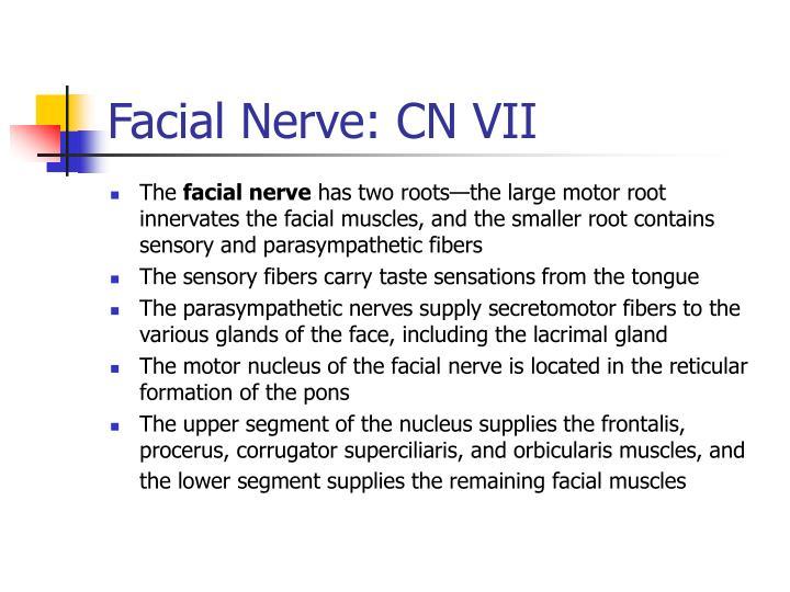 Facial Nerve: CN VII