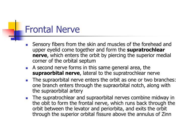 Frontal Nerve
