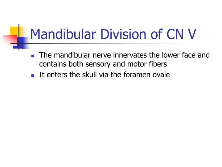 Mandibular Division of CN V