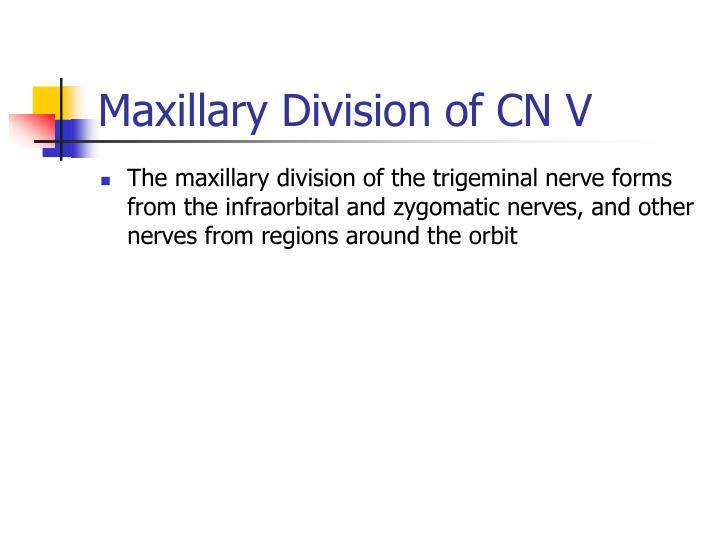 Maxillary Division of CN V