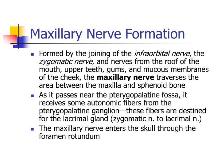 Maxillary Nerve Formation