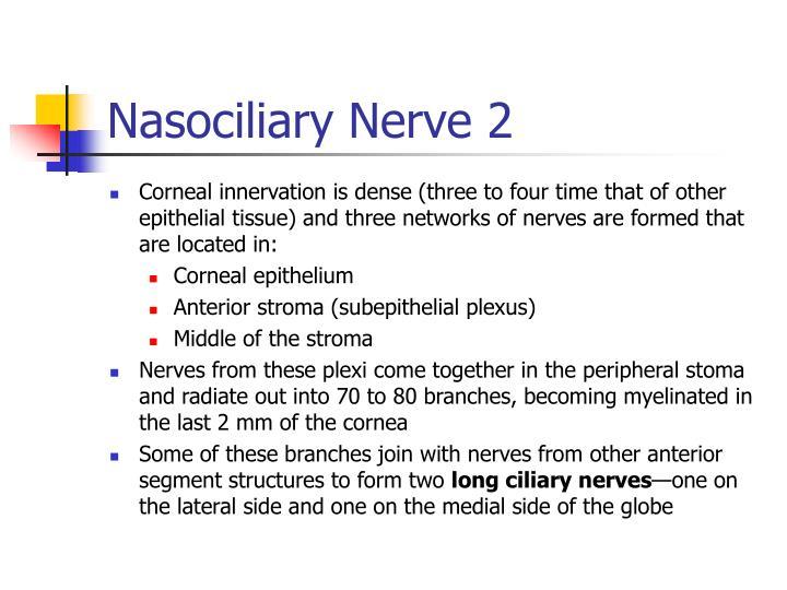 Nasociliary Nerve 2