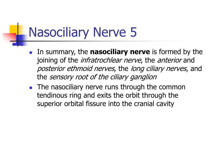 Nasociliary Nerve 5