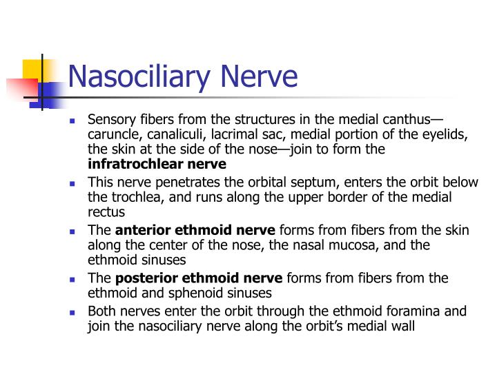 Nasociliary Nerve