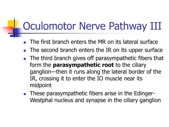 Oculomotor Nerve Pathway III
