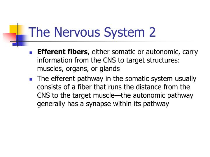 The Nervous System 2
