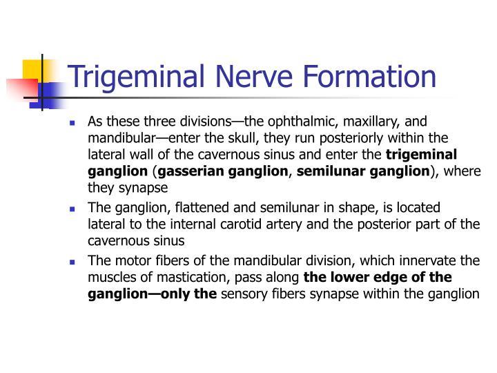 Trigeminal Nerve Formation