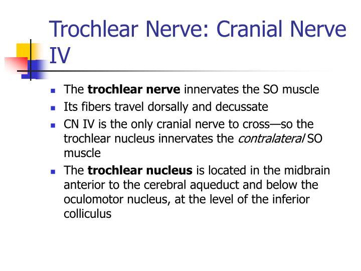 Trochlear Nerve: Cranial Nerve IV