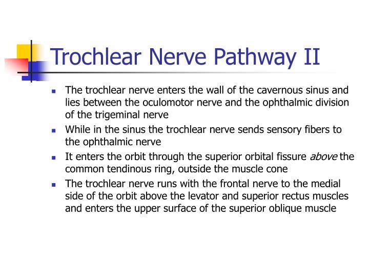 Trochlear Nerve Pathway II