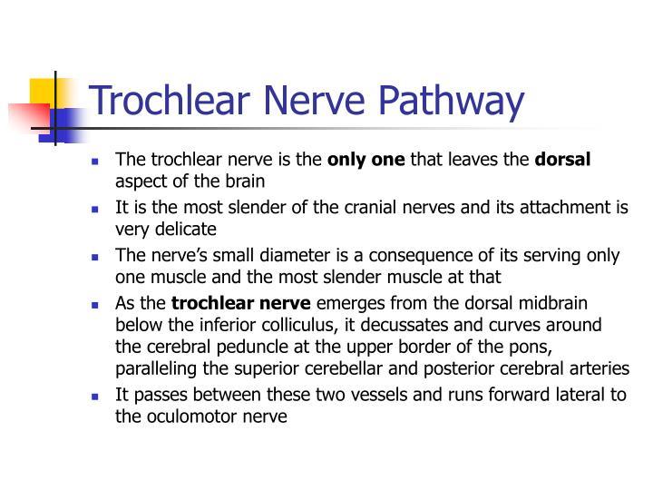 Trochlear Nerve Pathway