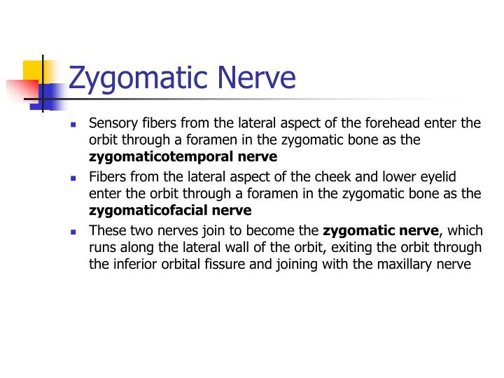 Zygomatic Nerve