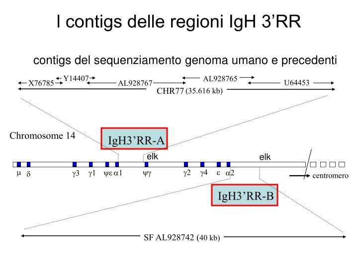 contigs del sequenziamento genoma umano e precedenti