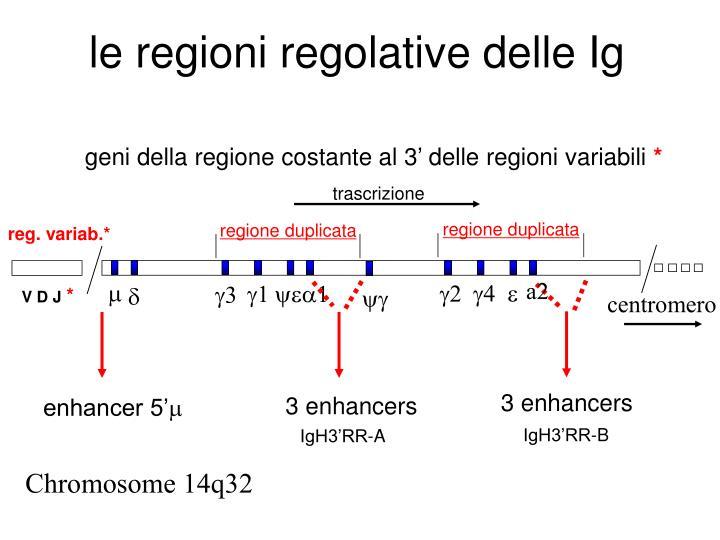 le regioni regolative delle Ig