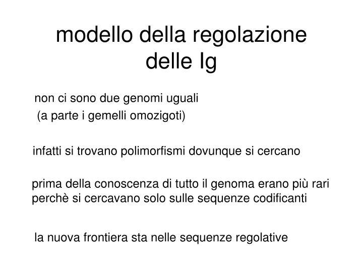 modello della regolazione delle Ig