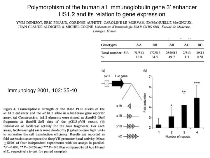 Polymorphism of the human a1 immunoglobulin gene 3' enhancer HS1,2 and its relation to gene expression