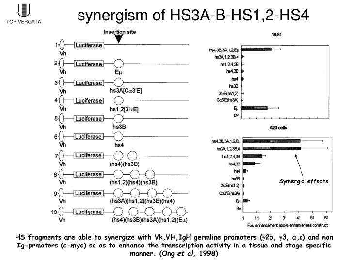 synergism of HS3A-B-HS1,2-HS4