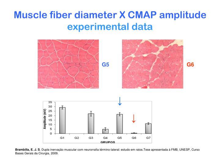 Muscle fiber diameter X CMAP amplitude