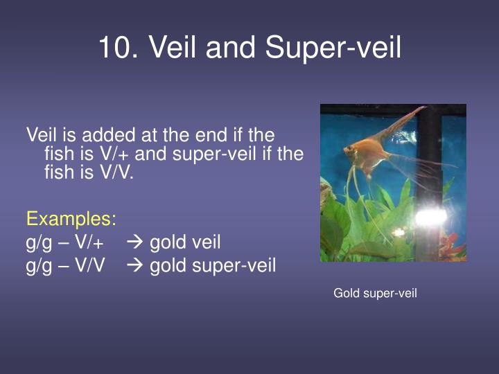 10. Veil and Super-veil