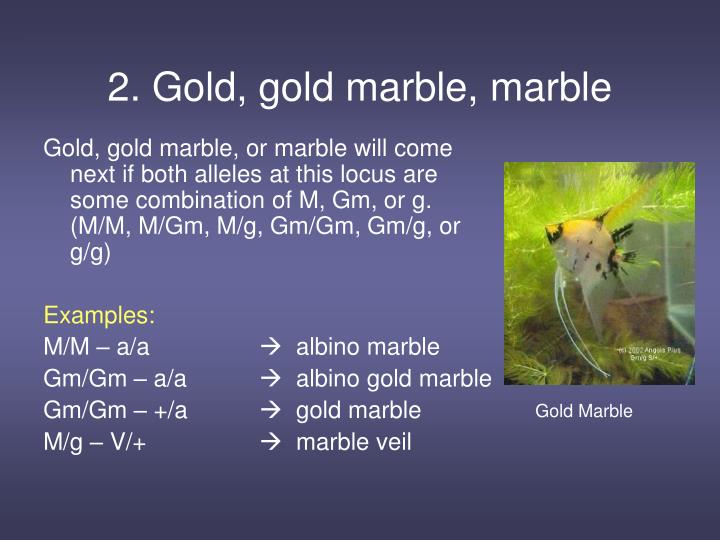 2. Gold, gold marble, marble