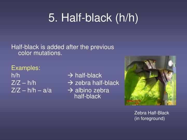5. Half-black (h/h)