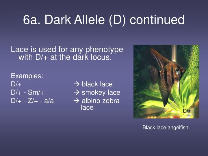6a. Dark Allele (D) continued
