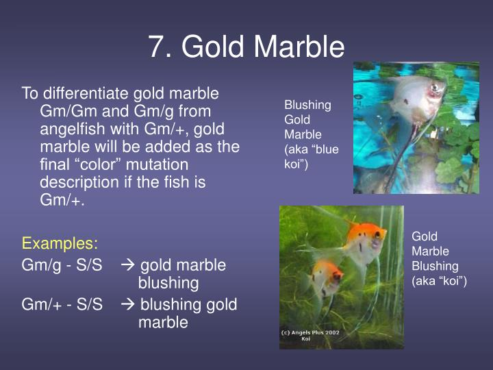 7. Gold Marble