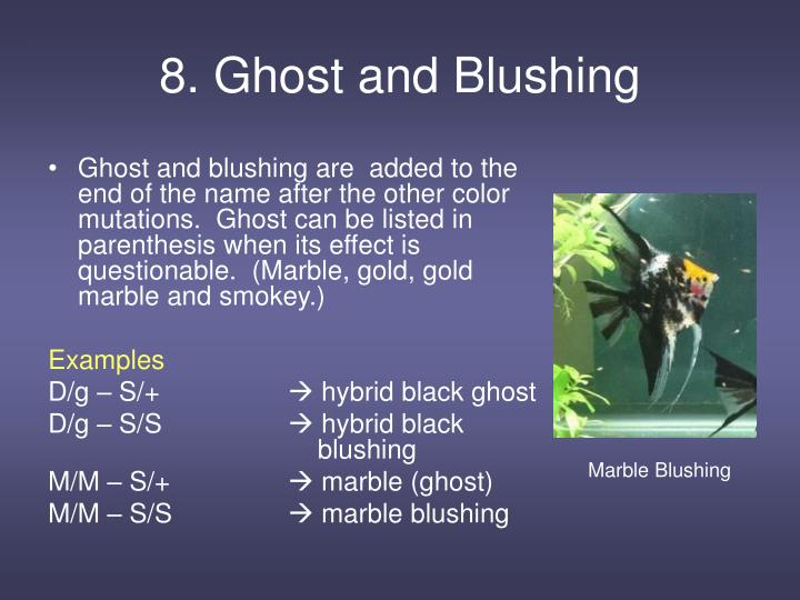 8. Ghost and Blushing